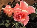Flowers - Uncategorised Garden plants 256.JPG