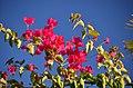 Flowers - panoramio (36).jpg