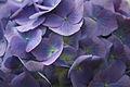 Flowers 1 - West Virginia - ForestWander.jpg