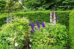 Flowers in Brodsworth Hall gardens (9312).jpg