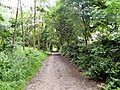 Footpath at Micklehurst - geograph.org.uk - 1365411.jpg