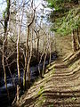 Footpath by the Clywedog - geograph.org.uk - 327007.jpg