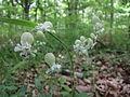 Forêt de Buzet 2014-05-08T14-10-18.jpg