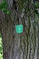 Forchtenstein - Rosalia - Naturdenkmal MA-005 - 2 Winterlinden I.jpg