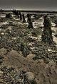 Foreshore at Kilnsea - geograph.org.uk - 951819.jpg