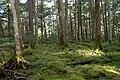 Forest in Yatsugatake 52.jpg