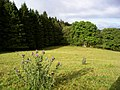 Forest margin - geograph.org.uk - 541078.jpg