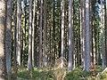 Forest near the Große Bode 07.jpg