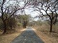 Forest road,kothapeta,AP - panoramio.jpg