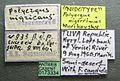Formica candida casent0173334 label 1.jpg