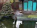 Fragment domku bobrów.jpg