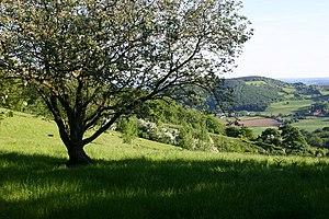 Worcestershire Way - From Abberley Hill