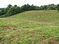 From dunes to pastureland - geograph.org.uk - 1396196.jpg