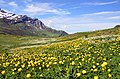 Fully covered fields with spring flowers makes walking near the Cormet de Roselend 1968 m enjoyable - panoramio.jpg