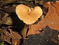 Fungus heart (1504475067).jpg