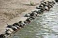 G8*tortoise (769535600).jpg