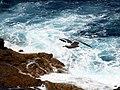 Galdar, Canarias, España - panoramio (4).jpg
