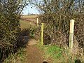 Gap in the hedge - geograph.org.uk - 1752653.jpg