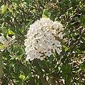 Garden plants Netherlands 18 april 2021 16 01 08 400000.jpeg