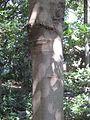 Gardenology.org-IMG 0713 rbgs10dec.jpg