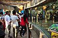 Gato montés Zoológico de Chapultepec.jpg