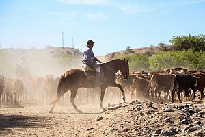 Gauchos in Calchaquí Valleys, Argentina 04.jpg