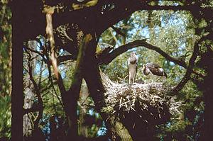 Gemenc - A nest in Gemenc