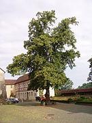 Georg Wagner -  Bild