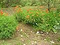 Giardino di Ninfa 132.jpg