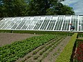 Glasshouse, Heligan Gardens - geograph.org.uk - 412636.jpg