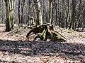 Gmina Narol, Poland - panoramio (5).jpg