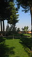 Grass - Tree - Morning - Mausoleum of Attar - Nishapur001.JPG