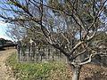 Graves in Kojirokuji Area 2.jpg