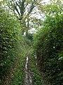 Green Lane, near Halsbeer Farm - geograph.org.uk - 1021894.jpg