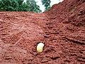 Grub 2 in soil Bangalore .jpg