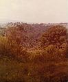Gumarcaaj Trees 1980.jpg