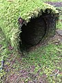 Gwaii Haanas National Park (27482027541).jpg