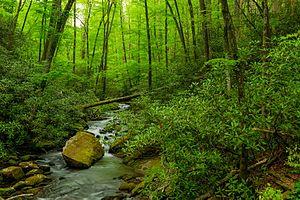Joyce Kilmer Memorial Forest - Joyce Kilmer Memorial Forest
