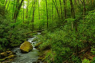 Joyce Kilmer Memorial Forest - Joyce Kilmer Memorial Forest