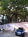 HK 上環 Sheung Wan 太平山街 Tai Ping Shan Street Blake Garden chinese banyan tree n back lane blue carpark Thursday morning October 2019 SS2 07.jpg