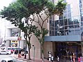 HK 香港 Admiralty 金鐘道 Queensway October 2018 SSG hotel n trees.jpg