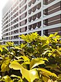 HK SW 上環 Sheung Wan near 信德中心 Shun Tak Centre 天橋 footbridge view 林士街多層停車場 Rumsey Street Multi-Storey Car Park February 2020 SS2 01.jpg
