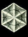 Haeckel Amphoridea-3b.jpg