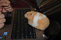 Hamster128.jpg