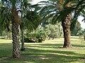 Havat Hanoi arboretum at Ruppin College 3.jpg