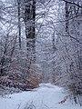 Havreballe Skov (vinter).jpg