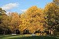 Herbst im Rombergpark - panoramio (10).jpg