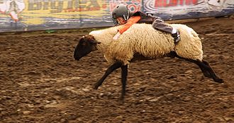Washington State Fair - Young fair attendees may participate in mutton busting.