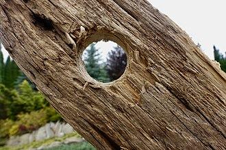 Hole - A hole through a tree.