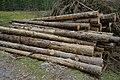 Holzlager im Seebachtal 20190820 003.jpg